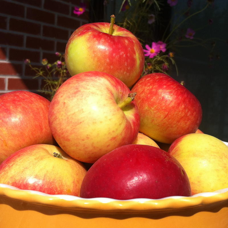 An Apple a Day – New information behind an old adage