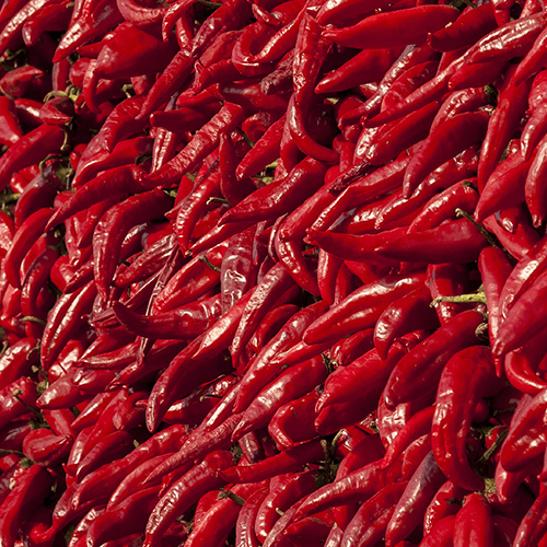 Hurts So Good: Hot Peppers & Chiles